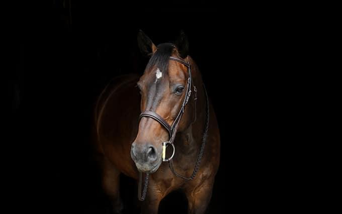 Yilan Dazhou Horse Club